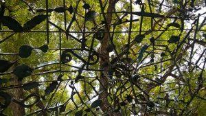 URI_Dach-Baum